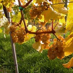Weingut Rabl - Langenlois
